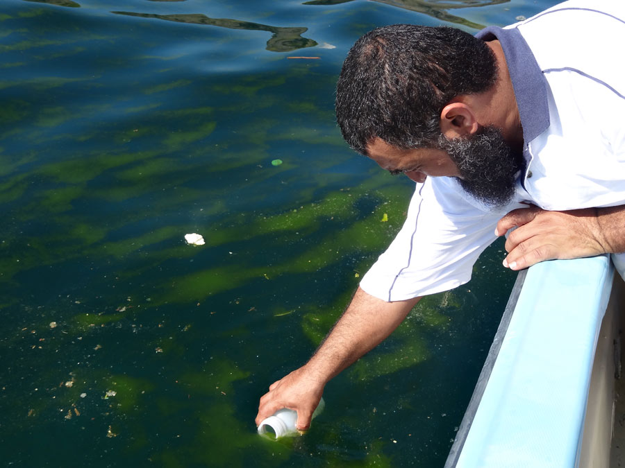 A researcher collects a sample from a Noctiluca scintillans bloom in the northern Arabian Sea. (Courtesy J. Goes)